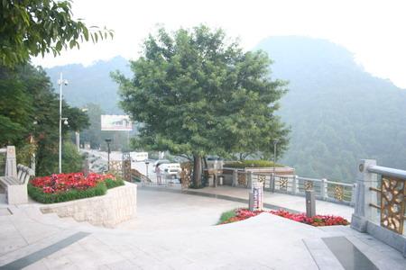 南山一棵树观景台